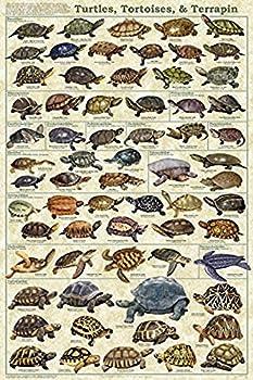tortoise size chart