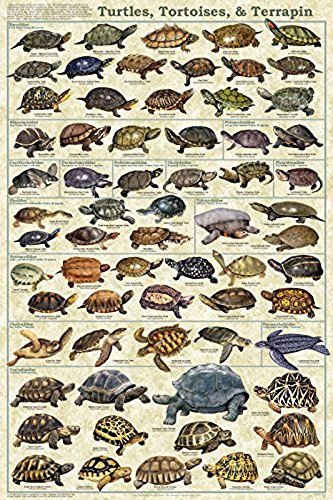 The Picture Peddler Inc. Schildkröten, Schildkröten, Terrapin Educational Wissenschaft Animal Diagramm Poster 24 x 36 24x36 Laminated Print