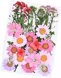 Daimay 35 PCS Natural Dried Flowers Mixed Multiple Real Pressed Flowers Assorted Colorful for DIY Resin Jewelry Nail Art F...