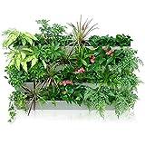Maceta con sistema de autorriego para jardín vertical, de Green Sun, de cerámica,...
