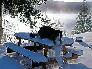 Lienzo de Bricolaje Regalo de Pintura al óleo para Adultos niños Jugar Perro Bernese Mountain Dog