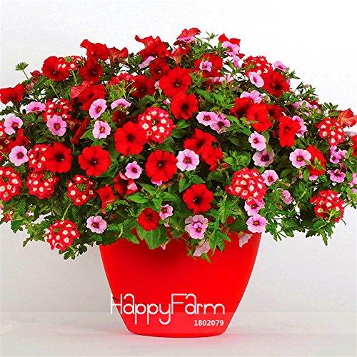Big Promotion! Parc Glamorous Mixed Girl Seeds Garden Petunia, 100 Pcs / Lot, Rouge à lèvres Coeurs Bonbons et beauté féminine, # K4993H