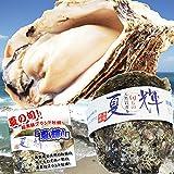天然岩牡蠣 (活)夏輝牡蠣 300g-400g前後10個(大サイズ) ブランド 夏輝牡蠣 鳥取産 カキ 刺身用 (10個)