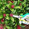 GRÜNTEK Sécateur à Fleurs Bonsai Plantes. Ciseaux pour Fleuriste et Jardinage Colibri a lame Longue en acier SK5 #5