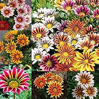 Amazon.es: Flores - Semillas: Jardín