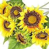 sunflower stems