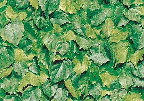 alkor DecoDesign Klebefolie, Grün, 45 x 200cm, 9