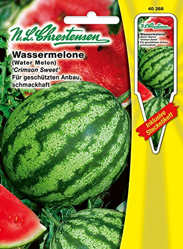 Wassermelone 'Crimson Sweet' dunkelgrün, für geschützten Anbau, schmackhaft