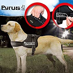 PYRUS Dog Harness