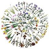 Antter Aufkleber Sticker Mädchen Fotoalbum Sticker Blumen Scrapbooking Vintage Sticker für Umschlag Kalender Notizbuch Tagebuch DIY Dekoration 200 Stücke