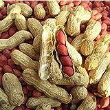 cfpacrobatics 10 pezzi / 1 confezione di pelle rossa di arachidi con guscio all'aperto bonsai in vaso facile da coltivare, piante da cortile di casa fattoria, decorazione regali da giardino