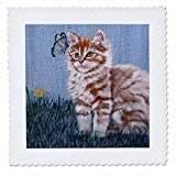 3dRose qs_44380_1 Gestreift getigerte Kätzchen, die auf