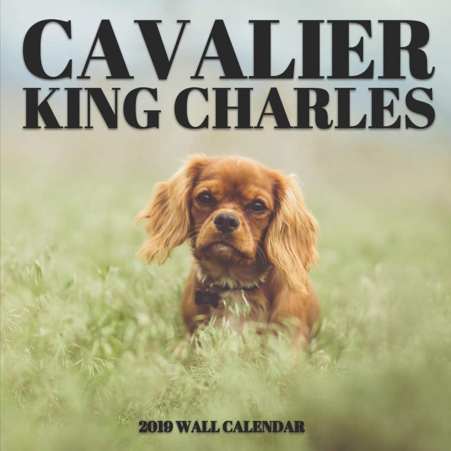 ウサギ冷蔵するオッズCavalier King Charles 2019 Wall Calendar: Mini Wall Calendar Dog Photography 12 Month Calendar Planner
