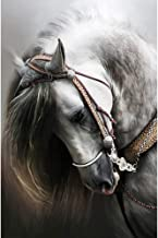 Moohue Beginner 14ct Counted Cross Stitch Kits Handsome Horse Handwork Embroidery Pattern DMC Cotton Thread Aida Cloth Needles Wedding Gifts Bedroom Decor(Handsome Horse)