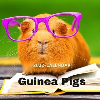 Guinea Pigs Calendar 2022: 12-Month Calendar, Cute Gift Idea For Guinea Pigs Lovers Men And Women, Classroom, Home, Office...