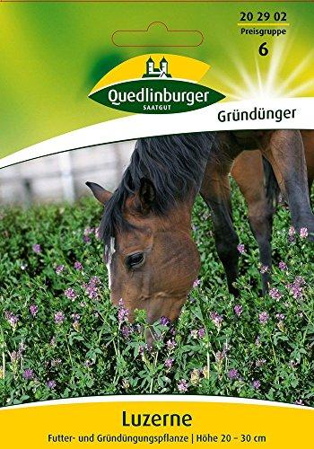 Gründünger - Luzerne von Quedlinburger Saatgut