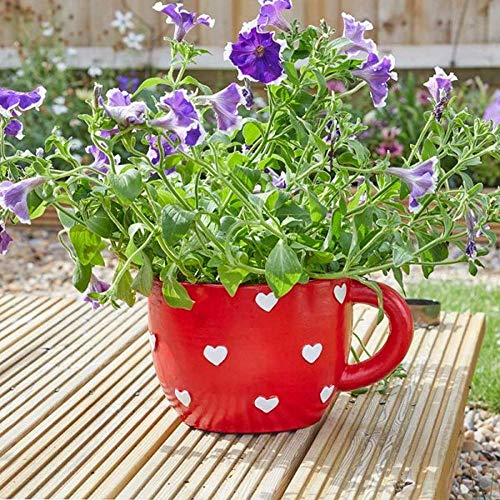 Smart Garden Flamboya Teapot & Teacup Heart Planter Pot | Weather Resistant (Teacup)
