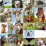 Edition Colibri - Juego de 20 tarjetas postales con animales divertidos y divertidos (20 tarjetas postales) para coleccionistas y postcrossing