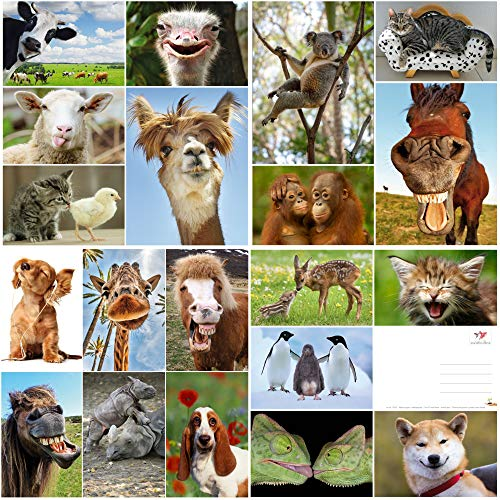 Edition Colibri Lot de 20 cartes postales avec animaux amusants et cool (20 cartes postales) pour collectionneurs et postcrossing