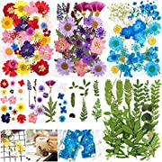 Whaline 120PCS+ Real Dried Press Flowers Dried Press Leaves Handmade Flower Petals Candle Making Flowers Press Plants Rose, Daisy, for Craft DIY Resin Jewelry Making Floral Decors Home Decors
