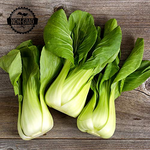 Gaea's Blessing Seeds - Organic Bok Choy Seeds (500 Seeds) Canton Pak Choi Chinese Cabbage Non-GMO Heirloom 90% Germination Rate Net Wt. 3.0g