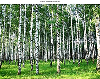Windowpix 24x18 Inch Decorative Static Cling Window Film Sunlit Forest Trees Printed on Clear for Window Glass Panels UV Protection Energy Saving.