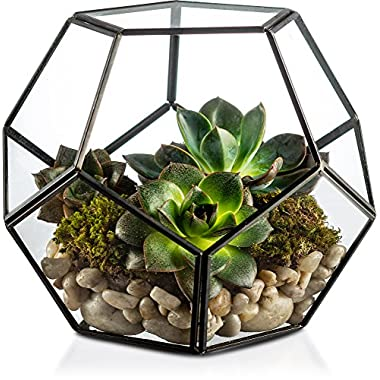 KooK Black Modern Geometric Terrarium