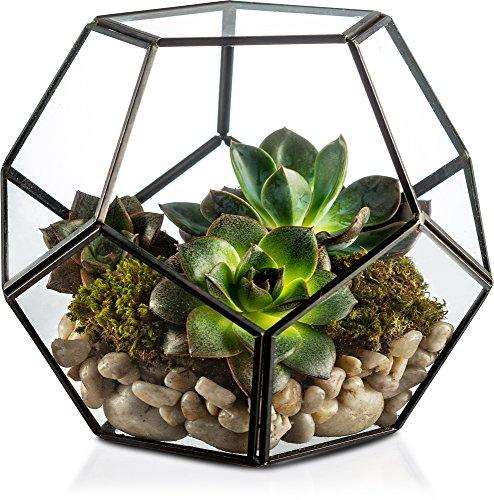 KooK Geometric Glass Terrarium, Eloquent Design, Plants, Succulents, Votive Candle Holder (Black)