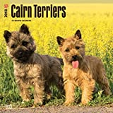 Cairn Terriers 2018 12 x 12 Inch Monthly Square Wall Calendar, Animals Dog Breeds Terriers...