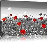 schöner rot leuchtender Mohn schwarz/weiß Format: 80x60