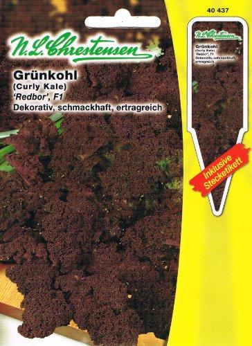 Grünkohl 'Redbor' F1 dunkelrot, dekorativ, schmackhaft, ertragreich ( mit Stecketikett)