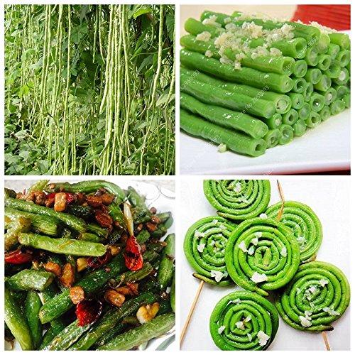 20pcs/sac importé à long haricots Graines Outdoor légumes bio savoureux Bonsai Jardin Plante en pot pour Flower Pot Planters
