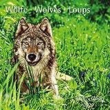 Wölfe Wolves 2020 - Broschürenkalender - Wandkalender - mit herausnehmbarem Poster - Format 30 x 30 cm
