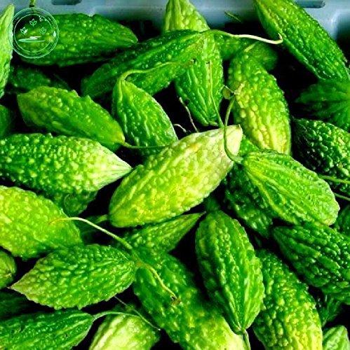 Ursprüngliche echte Balsambirne Samen, Früchte und Gemüse grün bitterer Kürbis-Samen, Bittermelone Samen, etwa 25 Partikel/pack