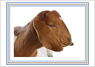 NW Pitney Ink Get Your Goat Birthday Card, 7 x 5 Inches (1769)