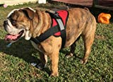 HDP Big Dog Soft No Pull Harness Size:Medium Color:Red