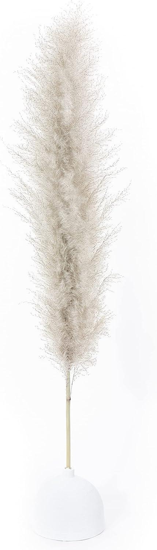 BQS Natural Outlet ☆ Free Shipping Color Dried Pampas Grass Set Finally resale start cm 120 Pc. 3 Bundles