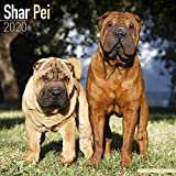 Avonside Publishing Ltd: Shar Pei Calendar 2020