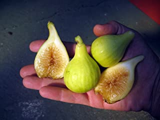 Best long yellow fig Reviews