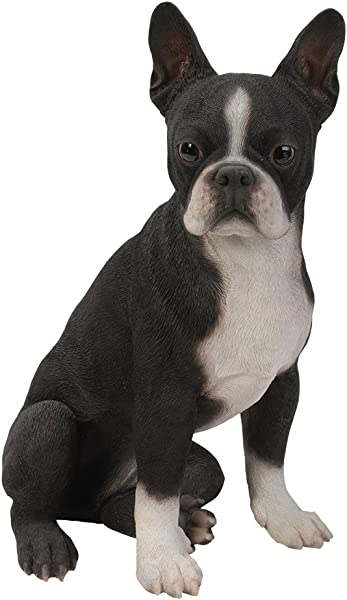Realistic Life Size Boston Terrier Statue Detailed Sculpture Glass Eyes Hand Painted Resin 16 Inch Figurine Home Decor Amazing Likeness