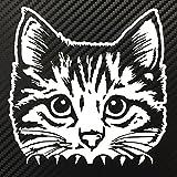 Peeking Cat Decal Sticker Custom Die-Cut Vinyl Kitten Kitty Cute