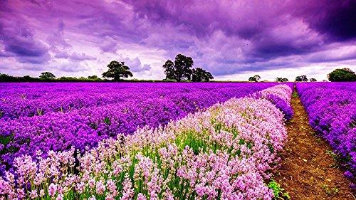 DDTOP 1000 Piece 30x20 Inch Size Basswood Premium Quality Wooden Jigsaw Puzzle Romantic Purple Field Lavender Flower Sunset Glow Oil Painting Puzzle