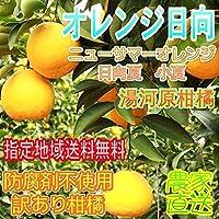 ご家庭用 希少品種 紅ニューサマーオレンジ 4.5kg 神奈川県湯河原産 無選別 安心の防腐剤不使用