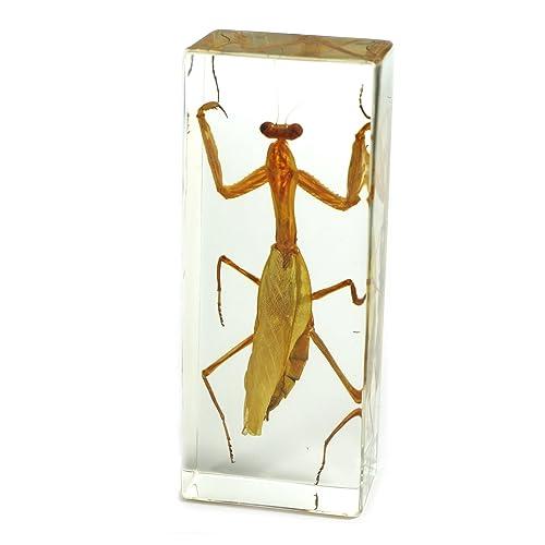 Praying Mantis Amazon Com