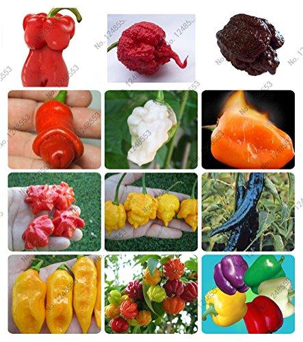 24 sortes de 200 graines de poivre de fruits de légumes, graines de piment géant + doux poivre + Carolina Reaper » + bonsaï de piment mis en pot