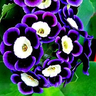 New Arrival!!! Scarce Rare Phantom Petunia Flower Seeds 200 Seeds Pack Garden Bonsai Petunia