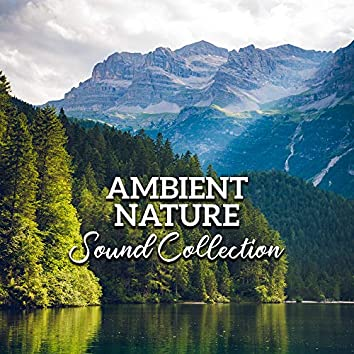 Ambient Nature Sound Collection: Sounds of Nature for Sleep and Relaxation, Inner Bliss, Deep Harmony, Calm Down, Zen, Relaxing Music Therapy