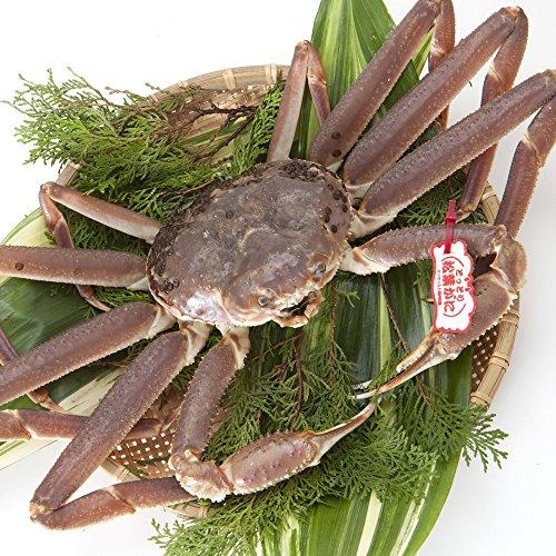 日本海市場 タグ付き特上松葉ガニ(ズワイガニ)姿 小サイズ1枚(活400g前後)「本物」の松葉ガニを産地直送でお届けします