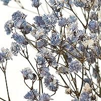 大地農園 プリザーブドフラワー アンティークプリザ・カスミ草 (15g入) #ブルー DO000050-600