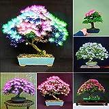 Portal Cool 5: 5057 20Pcs / Bolsa 5 Style semillas de plantas raras semillas de flor de Bonsai Yard Jardineras